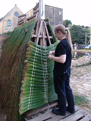 Thatching the cart with bundles of reeds
